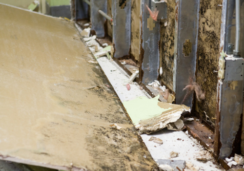 Mold Remediation & Removal Woodland Hills CA
